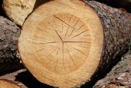 03-tronco-albero-tagliato-1